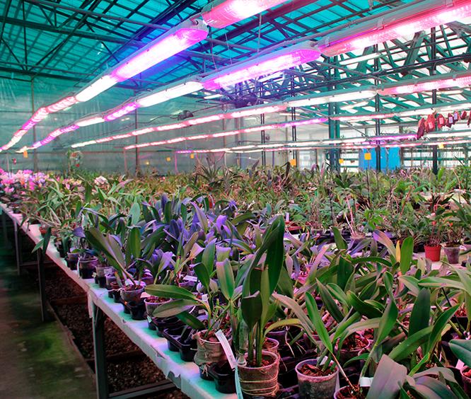 Производство-в-Музее-орхидей